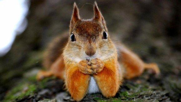#PoveștiTerapeutice: Prima călătorie a Iorei McGalant, veverița zburătoare